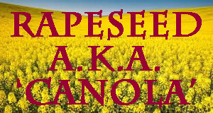 'Organic' canola is still genetically modified (GMO) rapeseed
