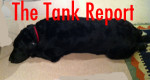 Tank, I'm afraid, has turned into a canine racist, eh!