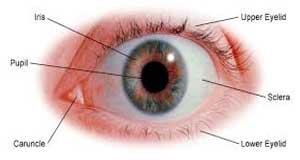Eye-Problems-FI