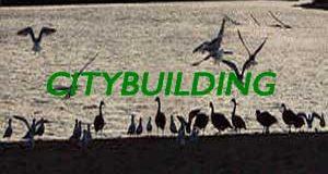 birds-on-waterfront-fi