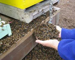Bees dead in their hives