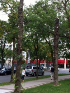 Street-trees