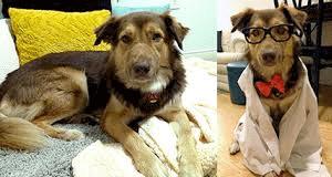Dog-humane-society-story