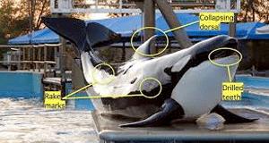 Orca-FI