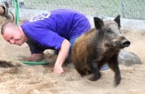 Pig-slips-away