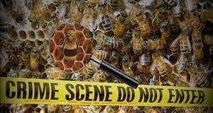 Bee-crime-scene-FI