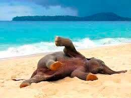 Elephant-in-sand